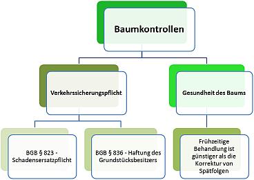 Schema Baumkontrolle